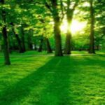 Green Forest Natures Facebook cover Photos 2014
