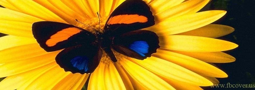 Butterfly Fb Cover Photos - 0001
