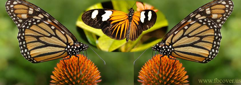 Butterfly Fb Cover Photos - 0002