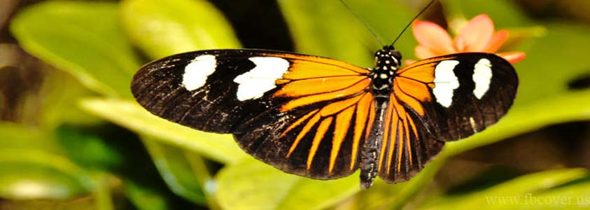 Butterfly Fb Cover Photos - 0009