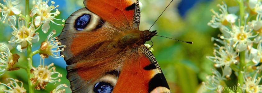 Butterfly Fb Cover Photos - 0004