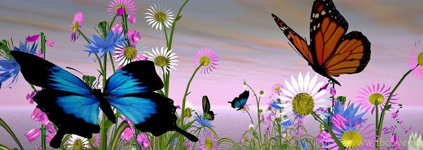 Butterfly Fb Cover Photos - 0010