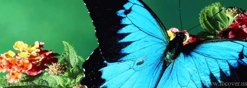 Butterfly Fb Cover Photos - 0007