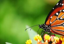 Butterfly Fb Cover Photos - 0008
