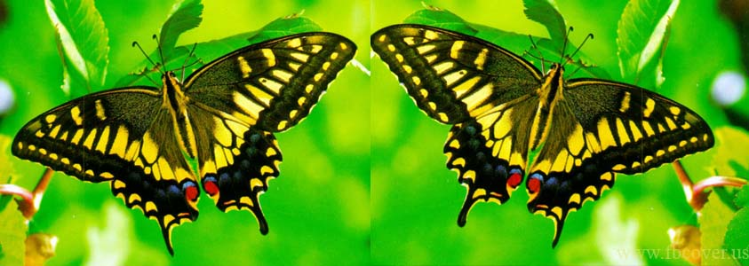 Butterfly Fb Cover Photos - 0012