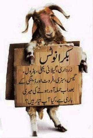 Bakra Eid Funny Pictures 2014