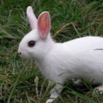 Cute Rabbit Wallpapers In HD