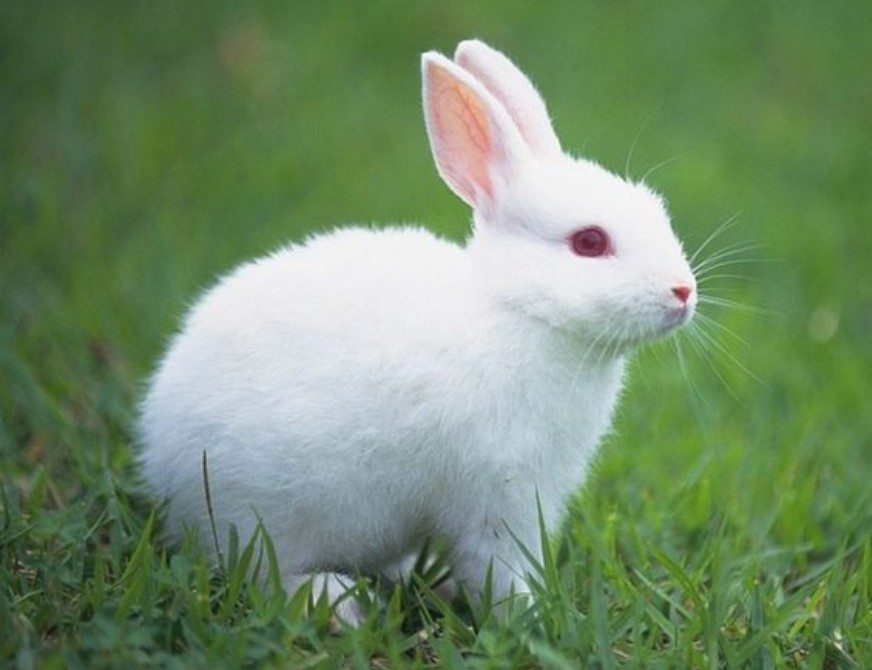 Cute rabbit hd beautiful wallpapers picture free for desktop hd walls rabbit hd wallpapers images gallery latest rabbits wallpapers rabbits backgrounds voltagebd Image collections