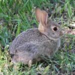 Cute rabbits desktop wallpaper