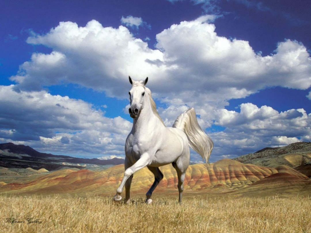 horse wallpapers hd pictures free download | hd walls