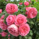 Fresh Flowers HD Wallpapers Download for Desktop (11)