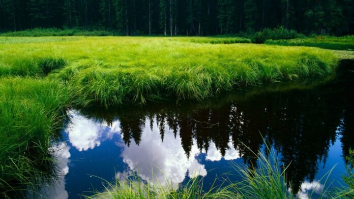 Green Feiled and Water Fall scene