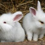 rabbits pictures rabbits photo gallery in White
