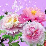Hd Flower Wallpapers For Desktop (1)