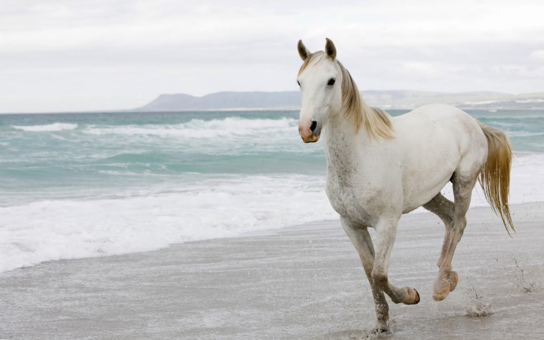High Definition Wallpapers White Horses on Beach pictures