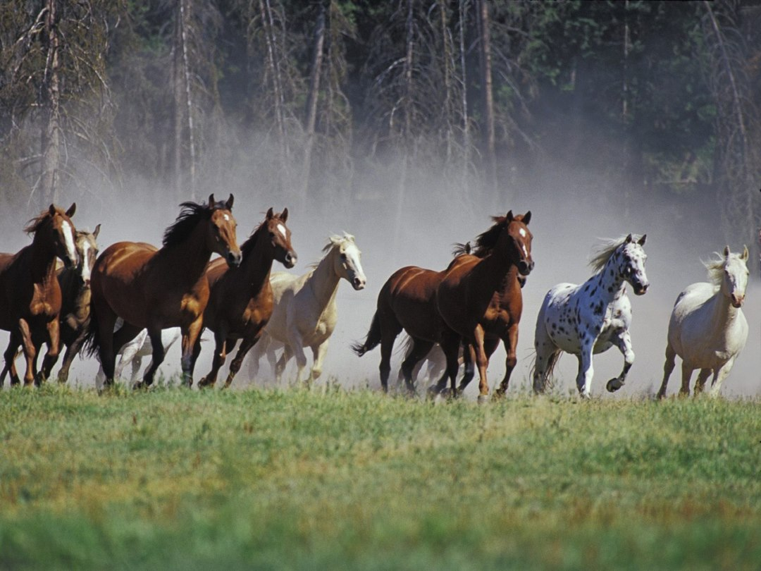 Horse Group Hd Pictures New HD Wallpapers Free Download