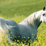 beautiful horse wallpapers