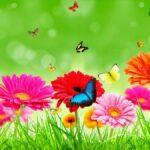 Jasmine Flower HD Wallpapers