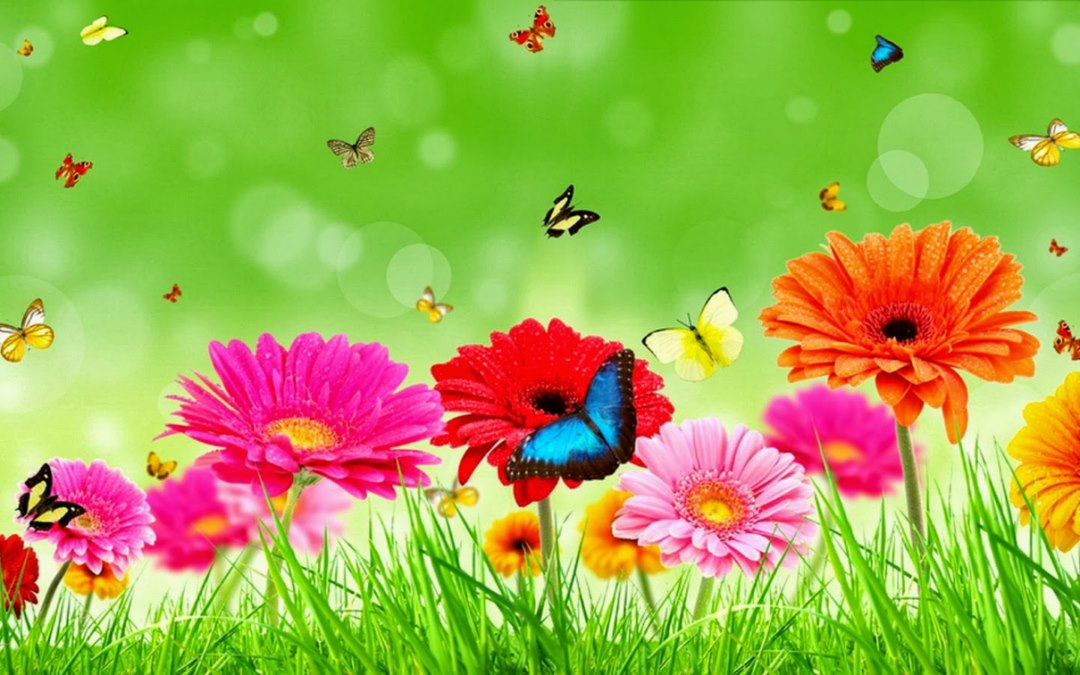 Jasmine Flower HD Wallpapers | New HD Wallpapers Pictures Free ... Xoloitzcuintli On Sale