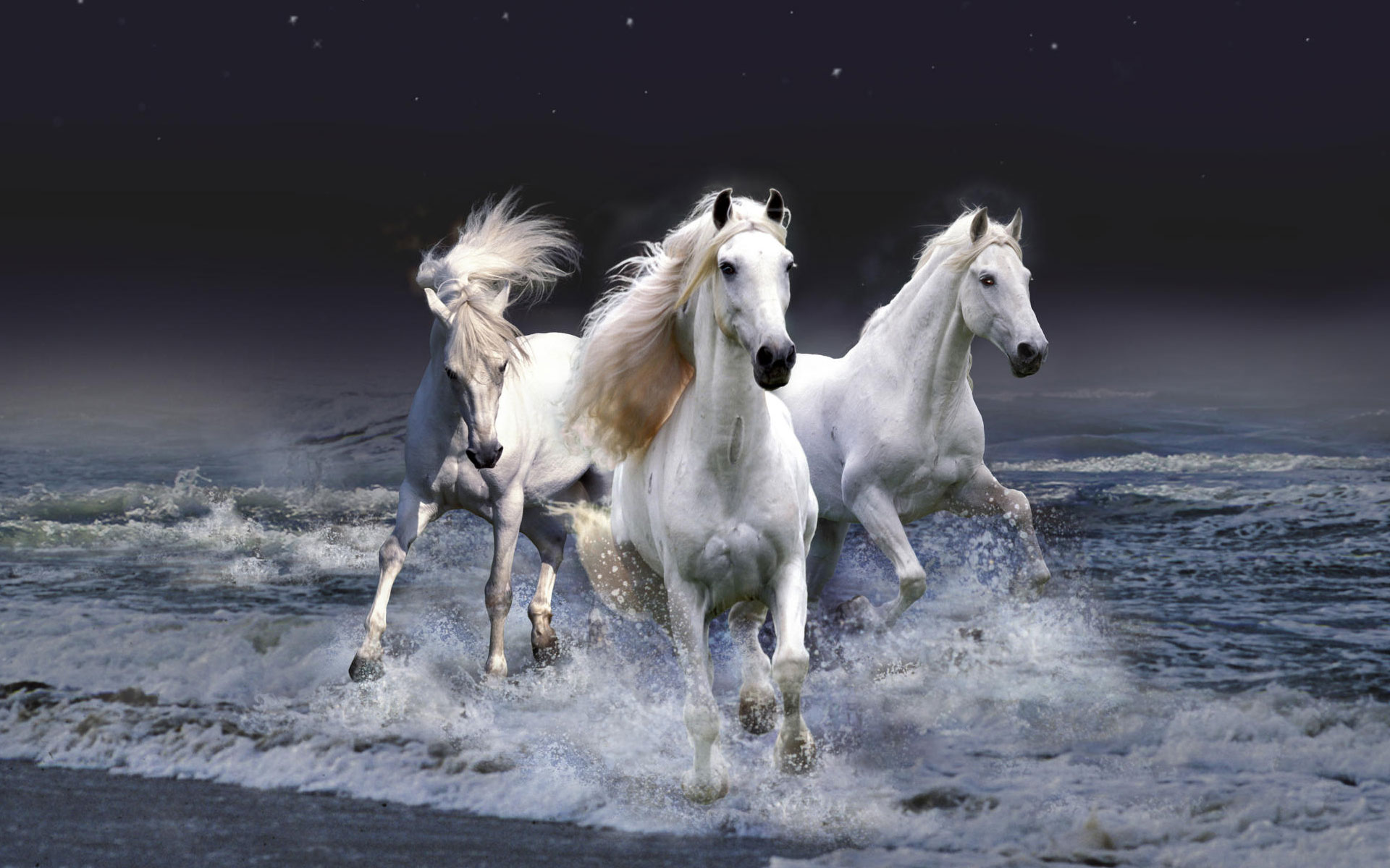 Download   Wallpaper Horse Glitter - Latest-Horse-Pics  Gallery_363626.jpg