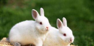 Top Beautiful Rabbit Wallpapers