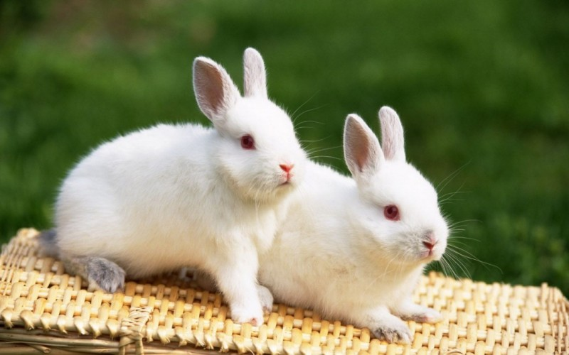 Cute & Love Rabbit Wallpapers for Desktop