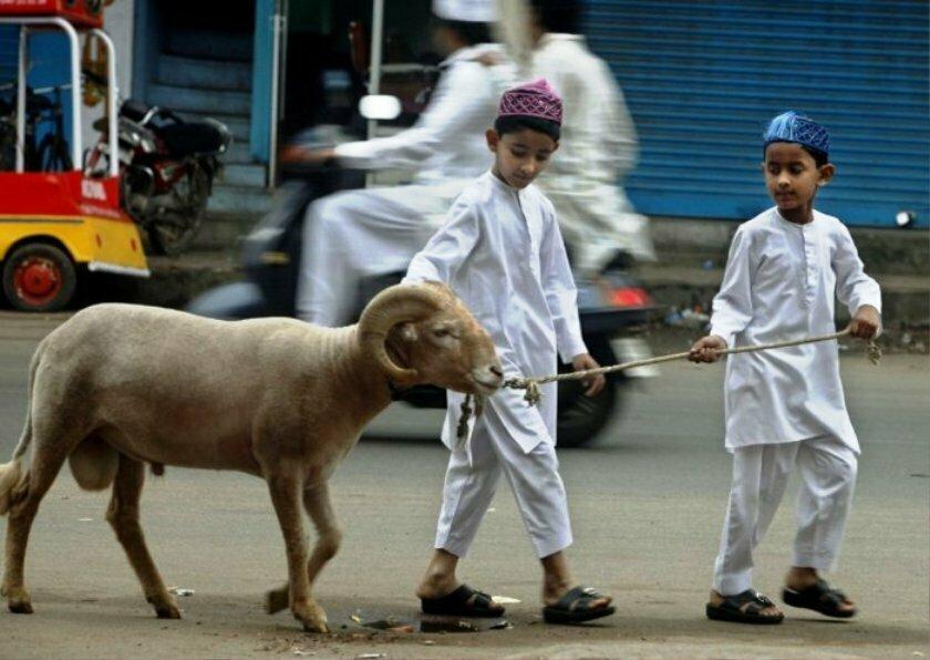 Bakra Eid (Eid Ul Azha) Funny Pictures
