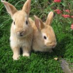 White and Brown color Rabbit Wallpapers