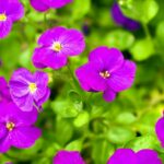 flowers hd wallpapers 1080p