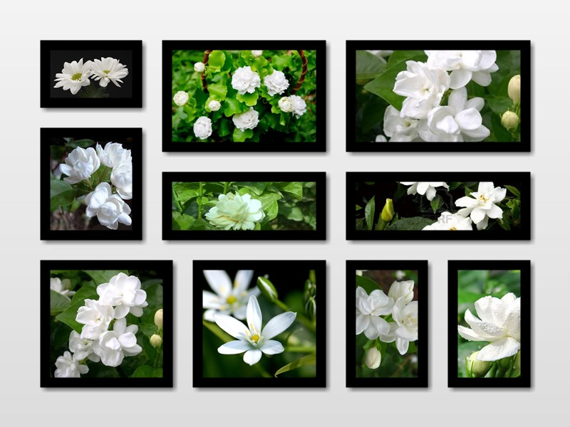 12 Beautiful HD jasmine flower wallpapers for Desktop