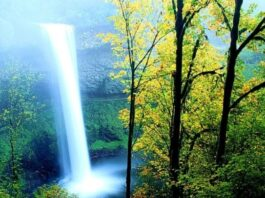 lovely nature wallpapers free download (7)