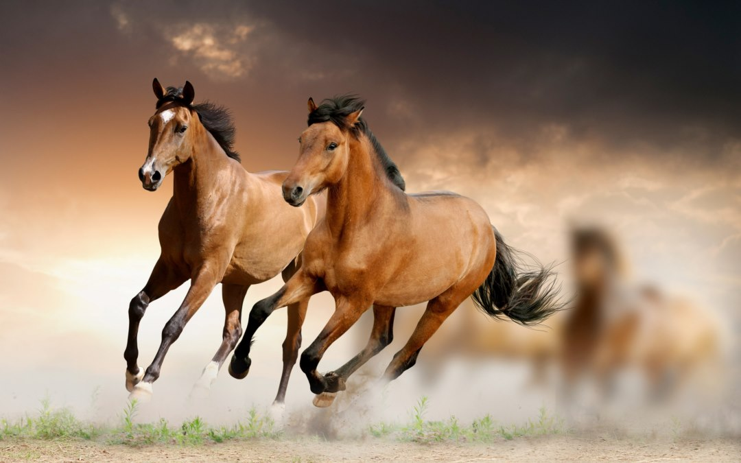 new Horse Wallpapers  Horse Backgrounds
