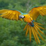 3D Birds Live Wallpaper App for Android