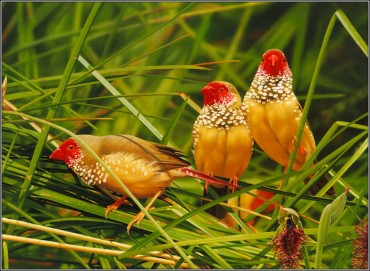 Colorful Birds Pictures 3d Wallpapers live images