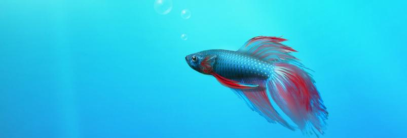 Beautiful Fish Facebook FB Cover Photos HD collection (2)