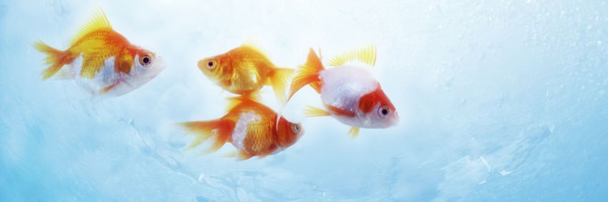 Beautiful Fish FB Cover Photos (2)