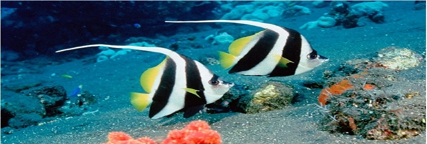 Beautiful Fish Facebook FB Cover Photos HD collection (1)