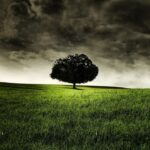 Big Tree Nature HD Wallpapers (1)