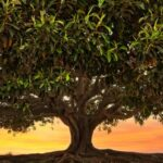 Big Tree Nature HD Wallpapers (2)