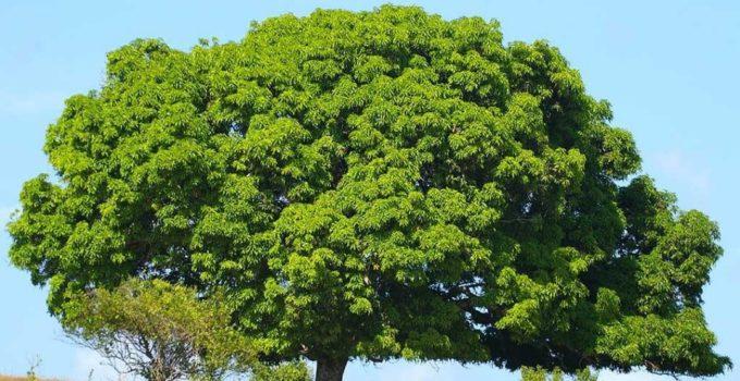 Big Green Tree Hd New Wallpapers Free Downoad Hd Walls