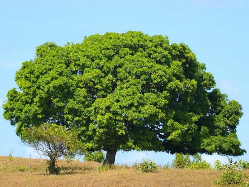 Beautiful Green Big Tree HD New Wallpapers