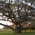 Big Tree Wallpapers (8)