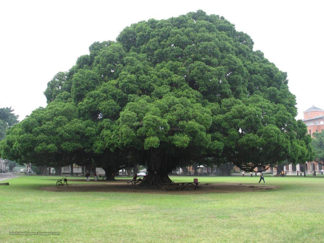 Big WALLPAPER TREES PLANTS PICTURES (1)