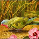 Animals Wallpapers Birds Wallpapers (2)