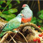 Birds Animals Mobile Wallpapers (1)