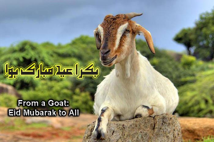 Eid Ul Adha (Bakra Eid) Best Wishing Eid Ul Azha Quotes (1)