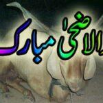 Eid ul Adha Bakra Eid Latest HD wallpapers Collection 2014 - 2015 (2)