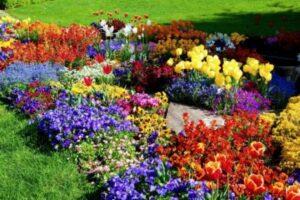 Flower Garden on Pinterest (1)