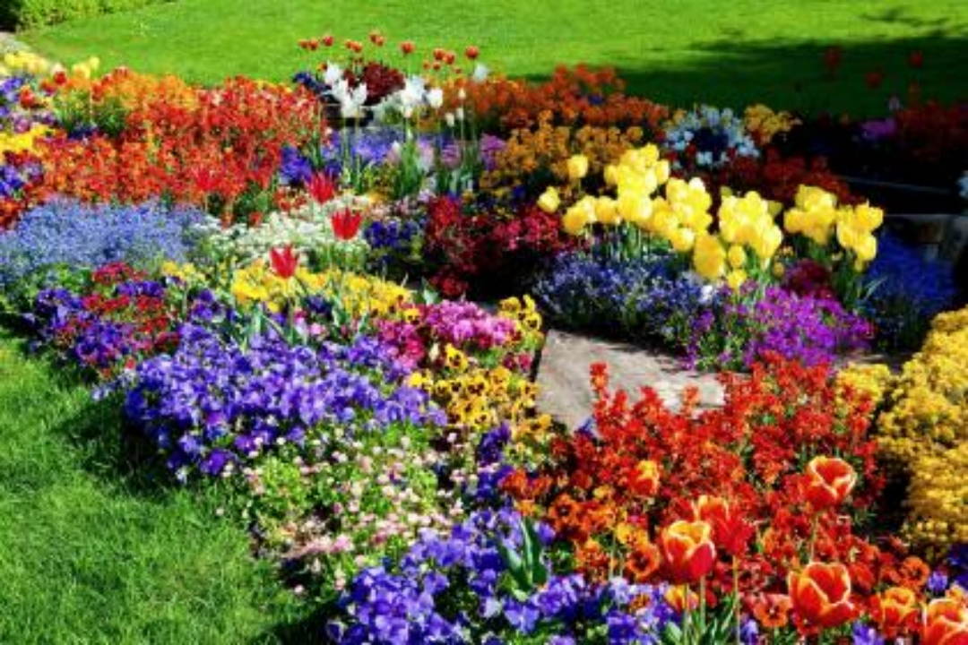 Flower garden on pinterest 2 new hd wallpapers for Flower landscape