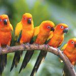 Flying Birds 3D Live Wallpaper
